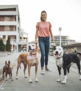 Tipping Use Cases - Dog Walker